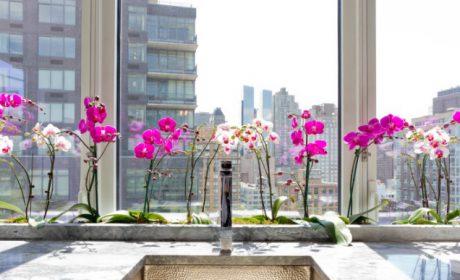 روش نگهداری و تکثیر گل ارکیده و استفاده از آن در دکور منزل