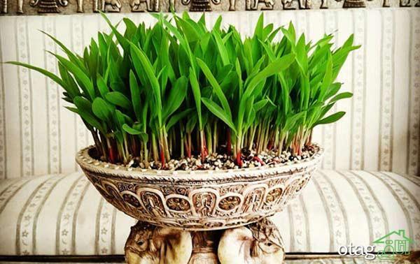 مدل سبزه عید در طرح های بسیار شکیل زینت بخش سفره هفت سین