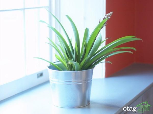 راهنمای ایجاد دکوراسیون بهاری به کمک گل و گیاه