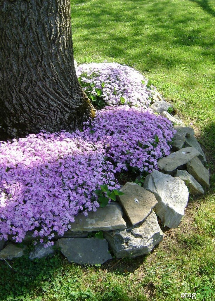 تکنیک های کاربردی لبه سازی چمن برای باغ یا حیاط