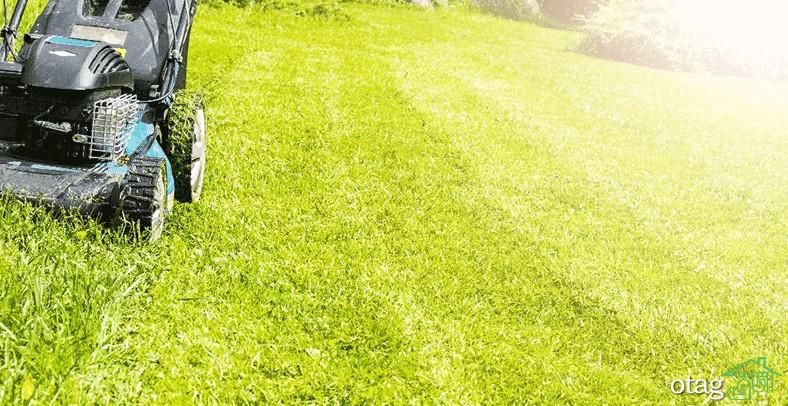 نکاتی فوق العاده کاربردی برای چمن زنی و پیرایش چمن