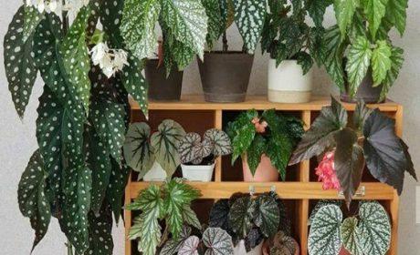 نکاتی اساسی که باید در رابطه با باغ هوشمند بدانید!