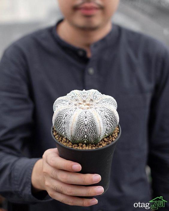 ایده های جذاب تزیین خانه با کاکتوس بهمراه معرفی زیباترین گونه ها