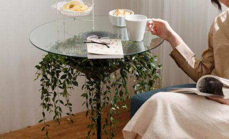 تزیین زیر میز شیشه ای توسط گیاهان مختلف برای دکوراسیون لاکچری خانه