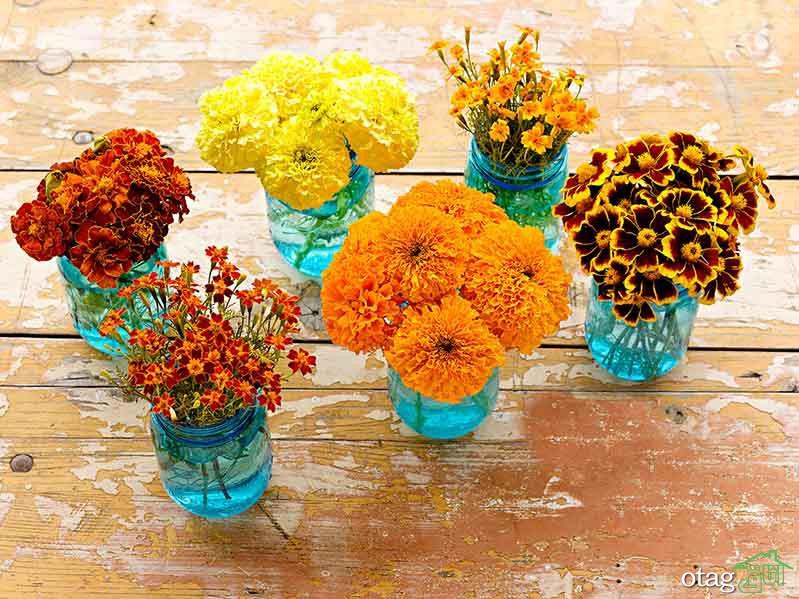 بهترین گلها برای باغچه با نگهداری آسان، معرفی 6 بذر گل زیبا