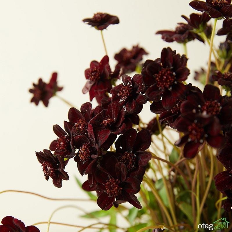 انواع گلهای دائمی به رنگ سیاه برای پرورش در باغچۀ خانگی