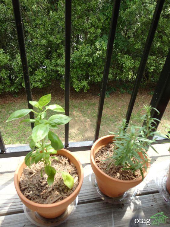 کاشت ریحان در گلدان و نحوه پرورش آن برای استفاده خانگی
