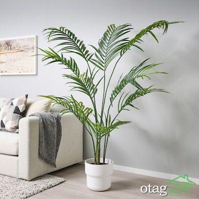 معرفی گیاهان آپارتمانی لوکس، آشنایی با 7 گونه شیک برای نشیمن