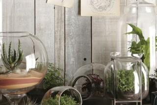 گیاهان آپارتمانی - آشنایی با انواع مدل گلدان گل و گیاه آپارتمانی / عکس