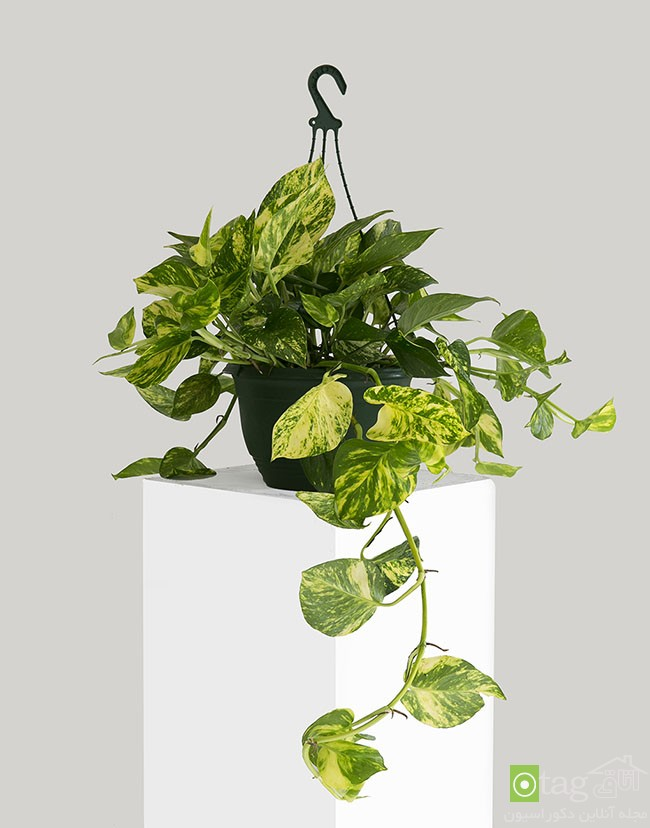 Air-puryfying-plants-for-your-interior (14)