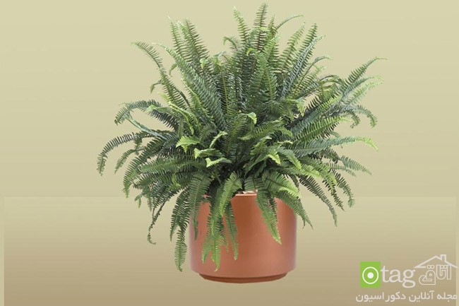 Air-puryfying-plants-for-your-interior (4)