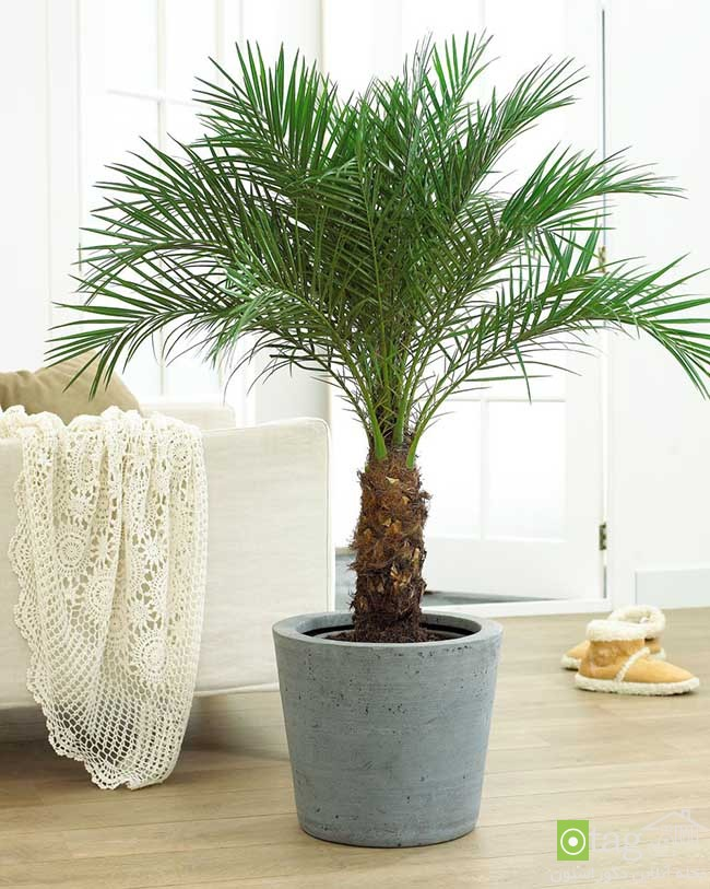 Air-puryfying-plants-for-your-interior (5)