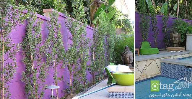 Privacy-hedge-created-by-plants (10)
