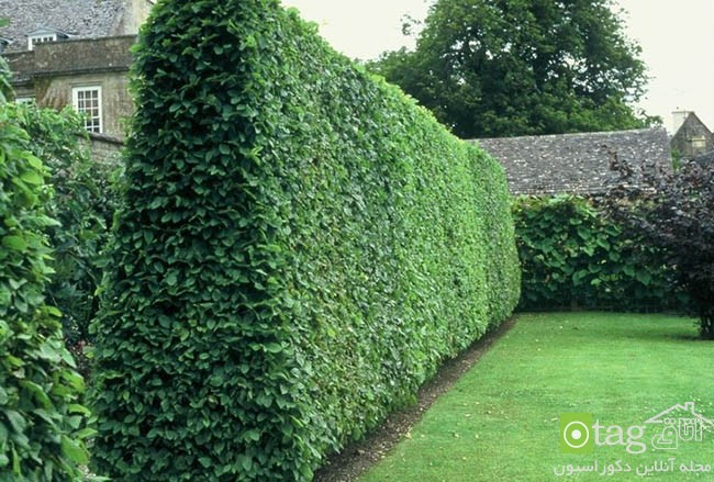 Privacy-hedge-created-by-plants (12)