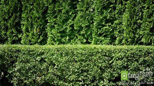 Privacy-hedge-created-by-plants (14)