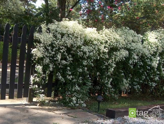 Privacy-hedge-created-by-plants (19)