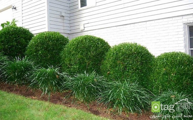 Privacy-hedge-created-by-plants (6)