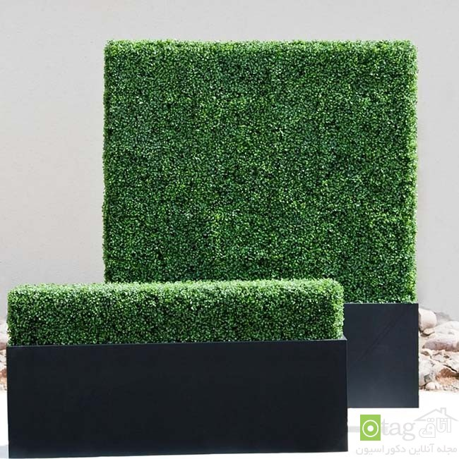 Privacy-hedge-created-by-plants (8)