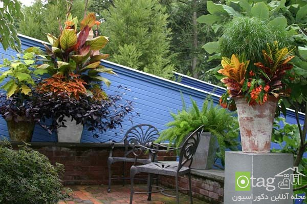 Tropical-plants-in-patio-and-yard-decoration (4)