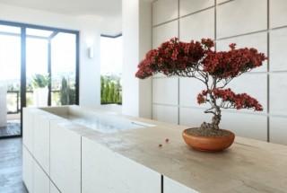 درخت بونسای در دکوراسیون منزل + قیمت - گل و گیاه آپارتمانی