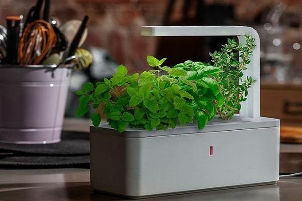 apartment-plants-for-interior-decorations (1)