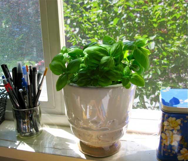 apartment-plants-for-interior-decorations (12)
