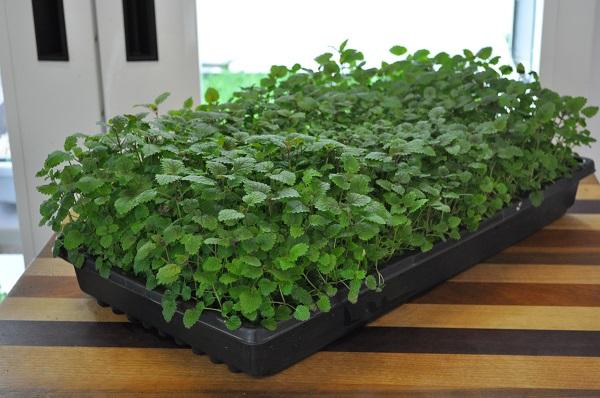 apartment-plants-for-interior-decorations (14)