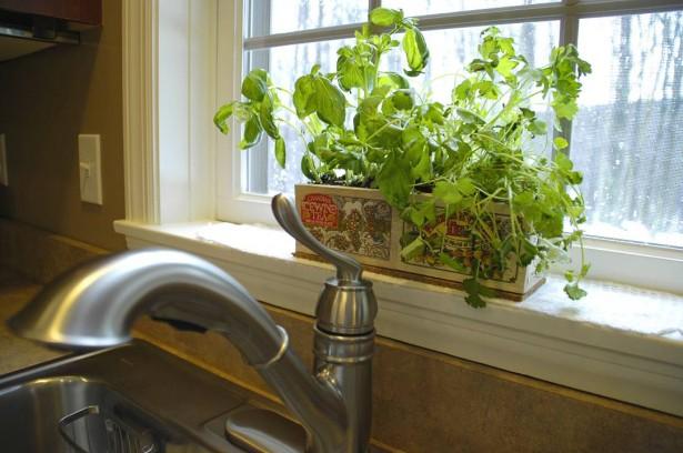 apartment-plants-for-interior-decorations (17)