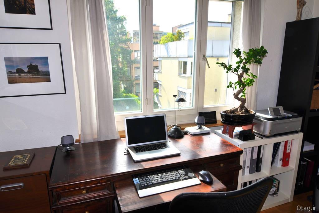bonsai-in-living-room (1)