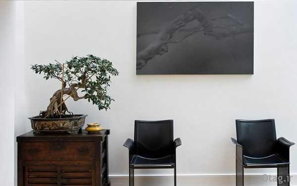 bonsai-in-living-room (2)