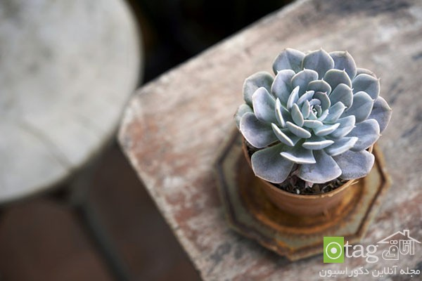 houseplants-with-less-care (1)