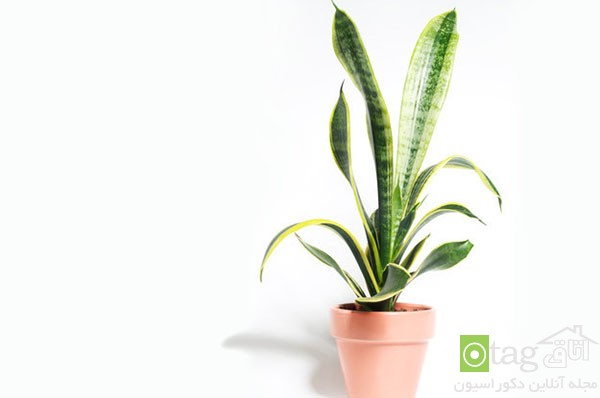 houseplants-with-less-care (11)