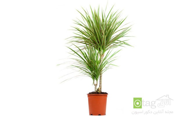houseplants-with-less-care (12)