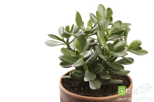 houseplants-with-less-care (2)