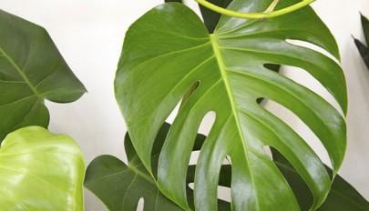 مدل های گیاهان آپارتمانی که نیاز به نگهداری کمی دارند
