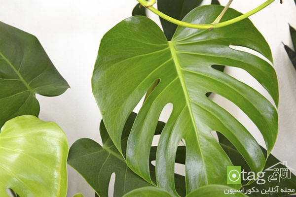 houseplants-with-less-care (5)