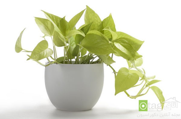 houseplants-with-less-care (6)