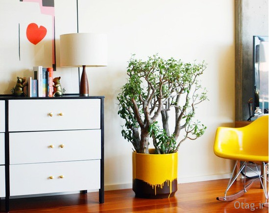 indoor-plants-fro-home (12)