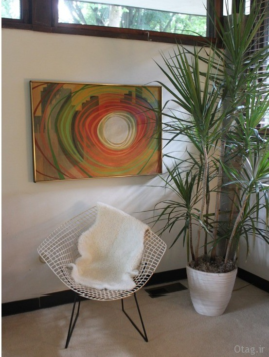 indoor-plants-fro-home (2)
