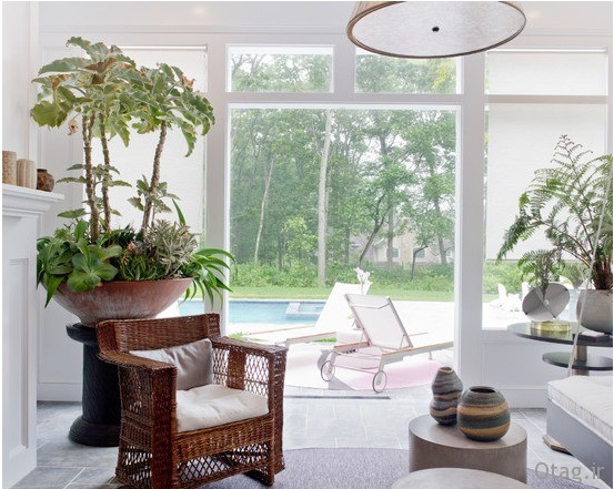 indoor-plants-fro-home (5)