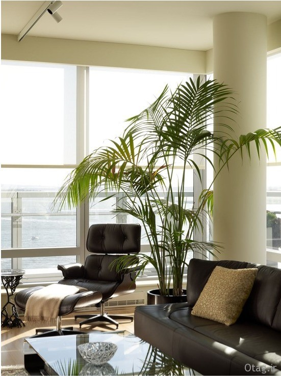 indoor-plants-fro-home (6)