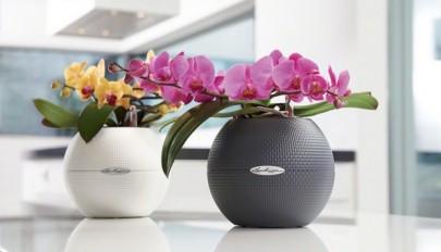مدل گلدان های زیبا و شیک مناسب فضاهای کوچک و بزرگ