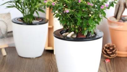 مدل گلدان با قابلیت آبدهی خودکار به گیاهان مناسب آپارتمان